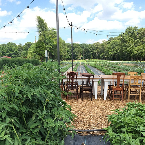Paisley & Jade loves participating at Dinner In The Field and the Farm Tables are perfect for this outdoor event!